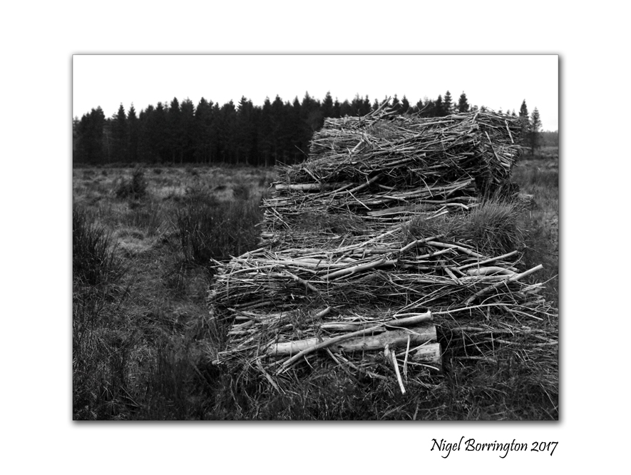 Seven day black and white photo challenge forestry